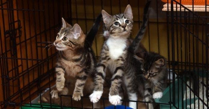 Barınaktaki Kediler