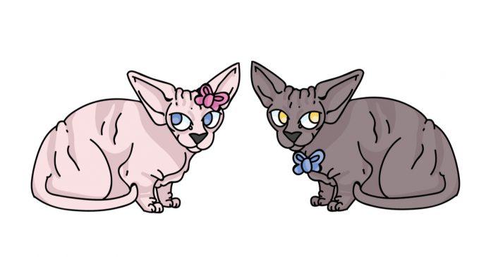 Kedi cinsiyeti