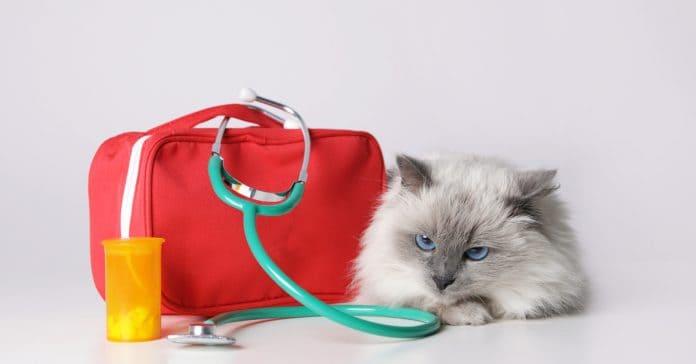 Kedi İlk Yardım Çantası