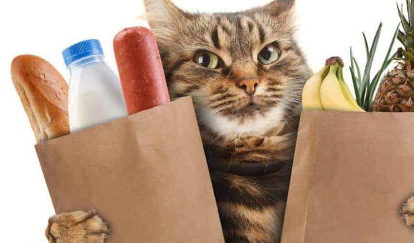 Yavru kedi sahiplenecekler için temel alışveriş & ihtiyaç listesi