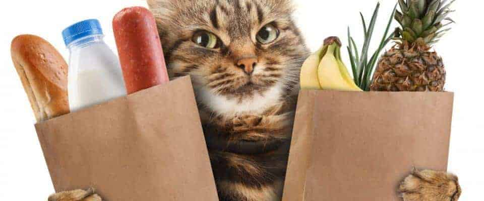 Kedi sahiplenecekler için temel ihtiyaç listesi