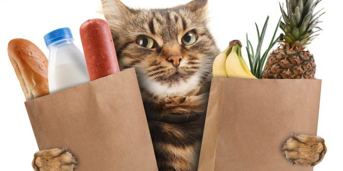 Kedi ve Alışveriş