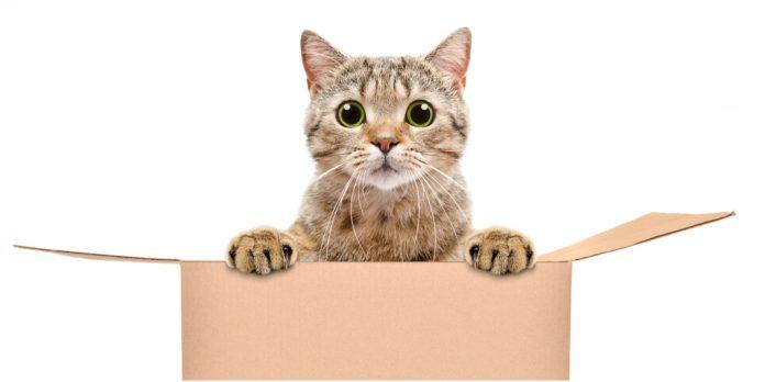 Kediler kutuları neden sever