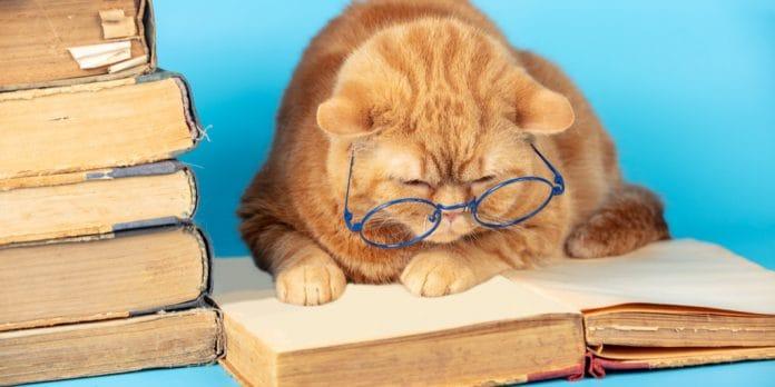 Kedilerin yaşı nasıl anlaşılır