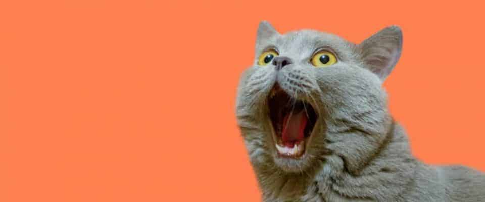 Kedinizle geçireceğiniz ilk 24 saat için önemli tüyolar!