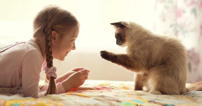 Kedilerle Tanışma