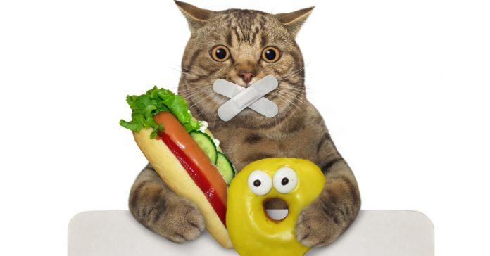 sandviç, donat, kedi