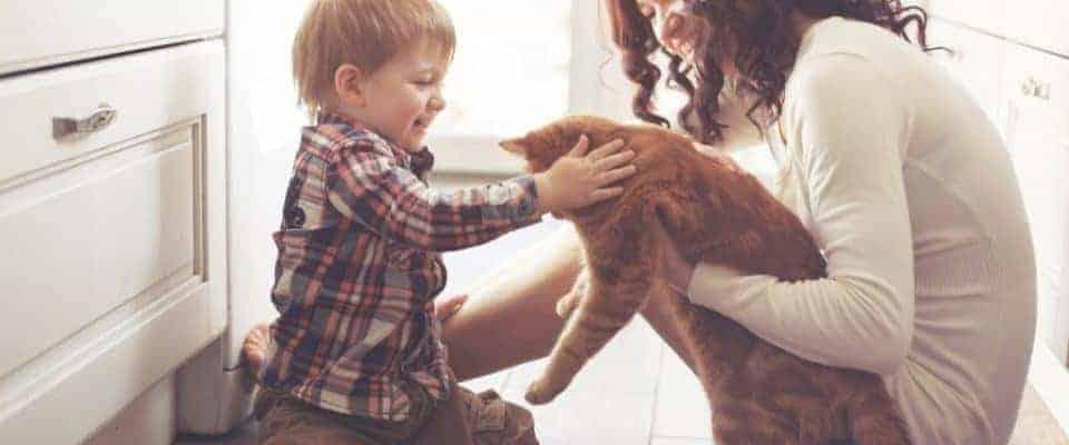 Yetişkin bir kedi sahiplenmenin avantajları