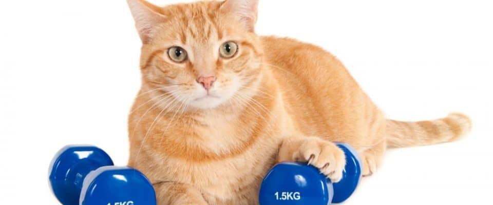 Kedinizin kilo vermesine yardımcı olmanın yolları