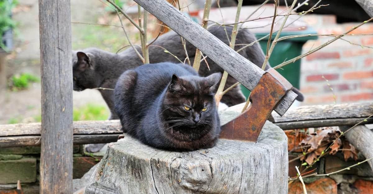 asosyal kedi