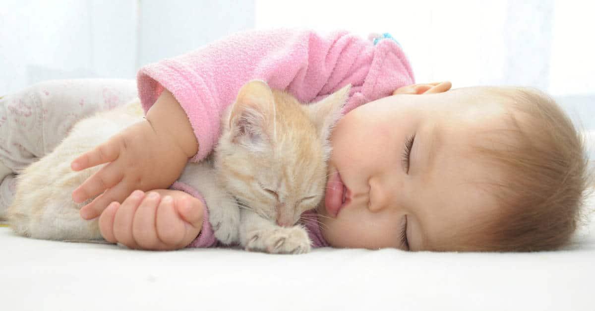 bebek ve kedi