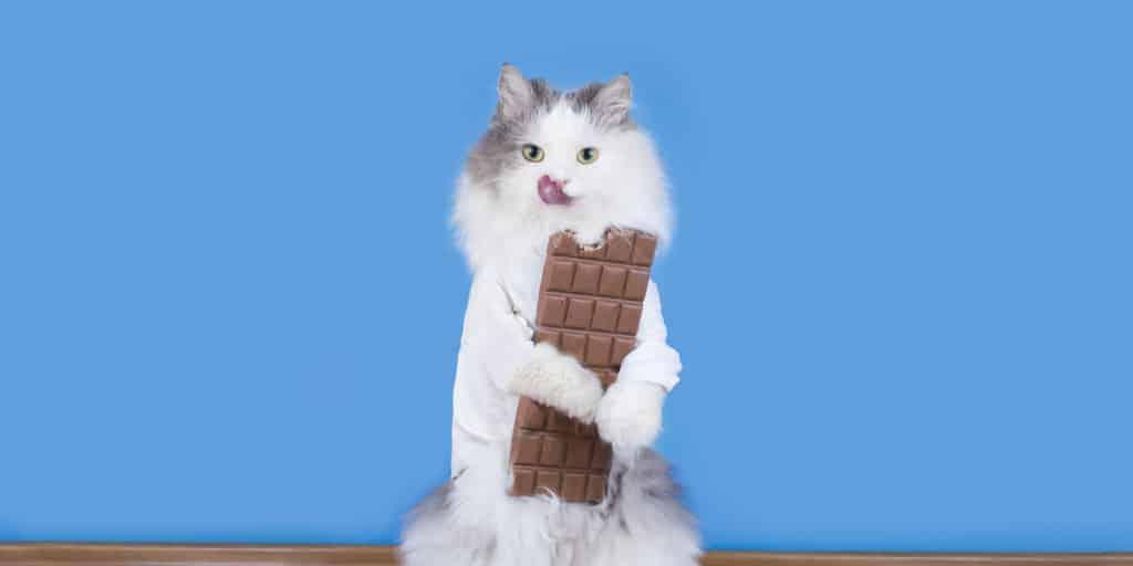 çikolata tutan kedi