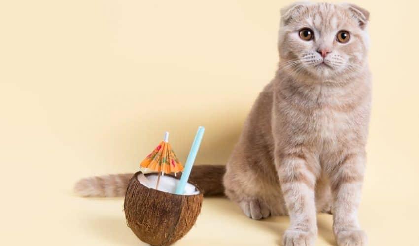 Kediler hindistan cevizi yiyebilir mi?