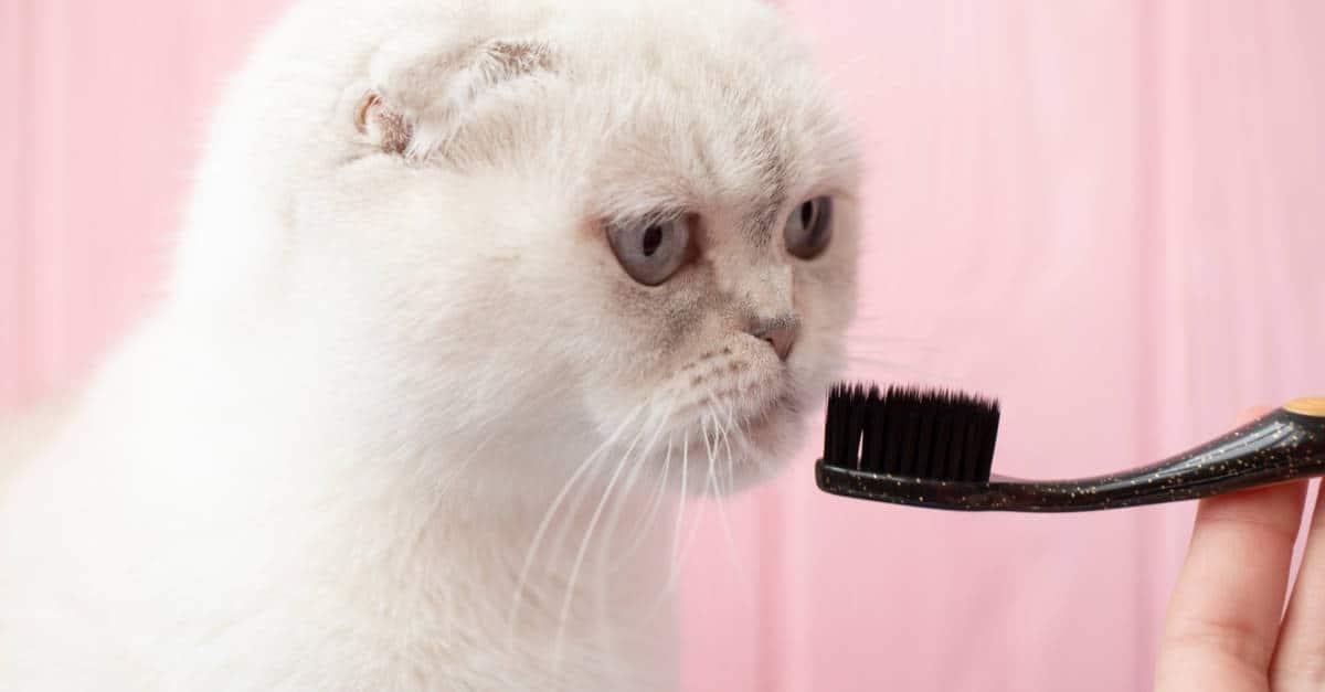 Diş Fırçası ve Kedi