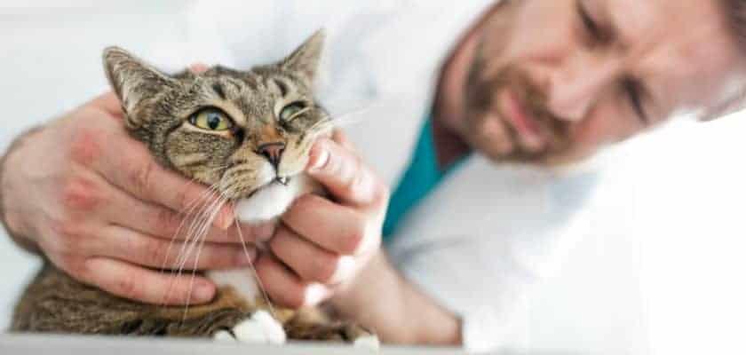 Diş Kontrolündeki Kedi