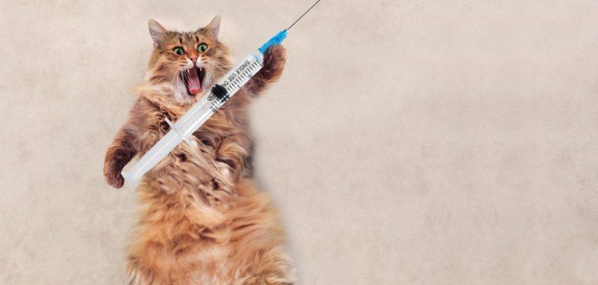 Elinde İğne Olan Kedi