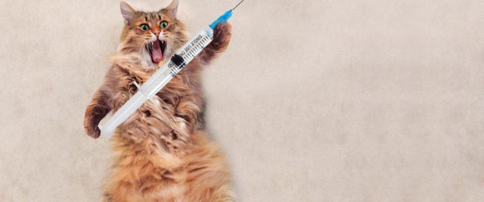 Kedilerde aşılama sorunu – Kedi aşıları protokolleri kılavuzu!
