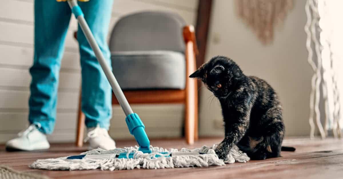 Ev Temizliği ve Kedi
