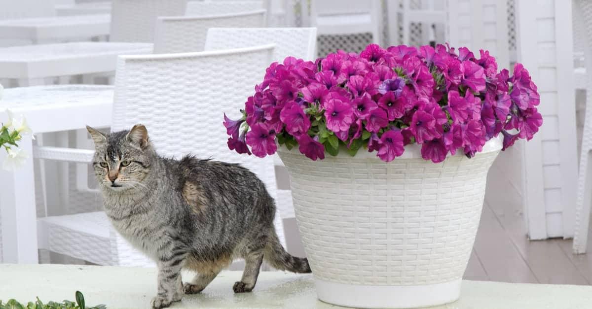 evcil hayvanlar için güvenli ev bitkileri