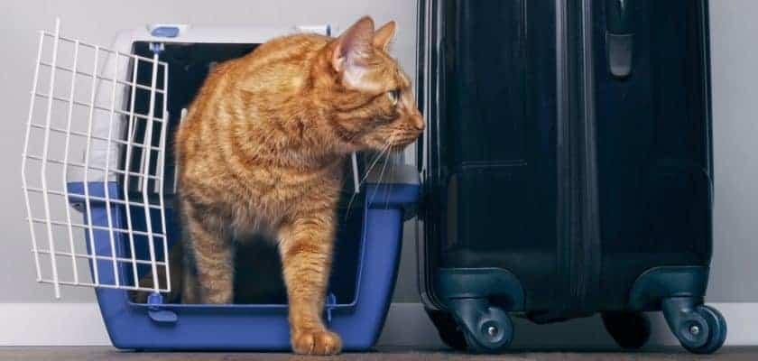 Evden Uzak Kedilerde Yaşanan Davranış Bozuklukları