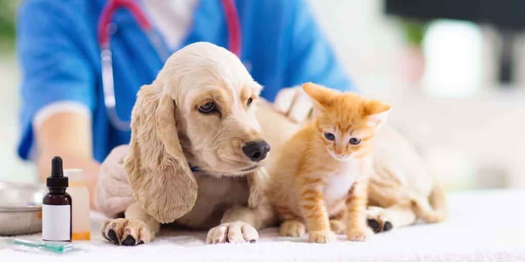 Hasta Kedi ve Köpek