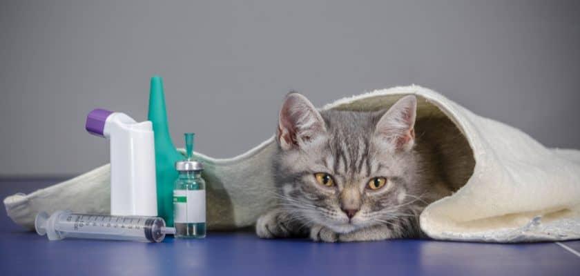 Hasta Yatan Kedi