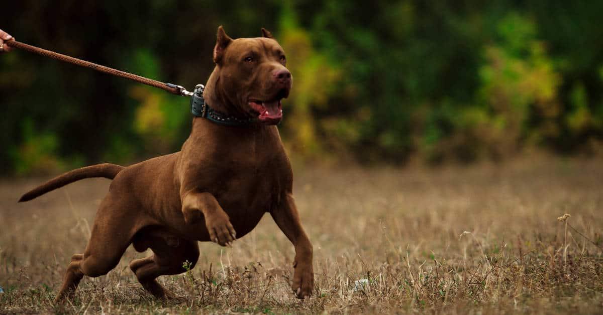 havlayan köpek
