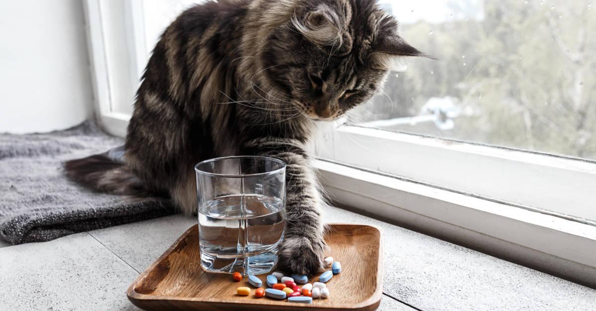 İlaçlarla oynayan kedi