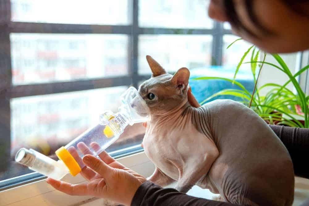 İnhaler kullanan kedi