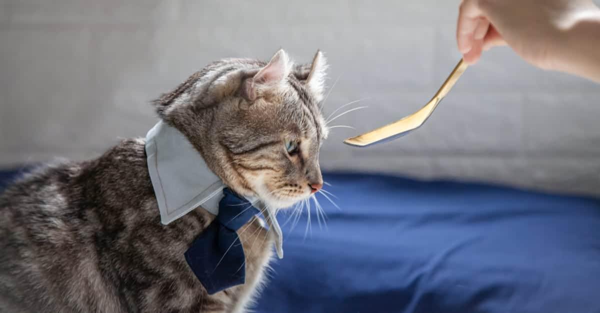 İştahsız Kedi