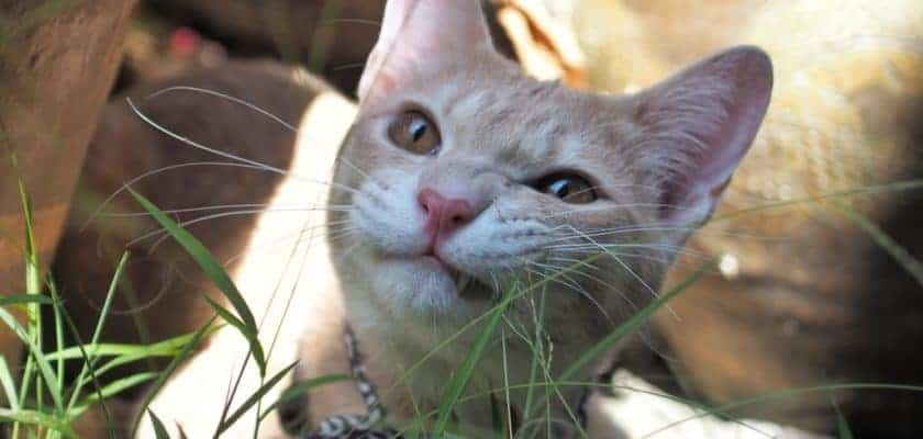 Kabız Kedi