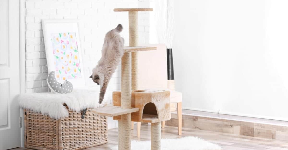 kedi ağacında oynayan kedi