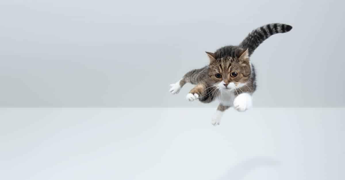 Kedi düşmesi