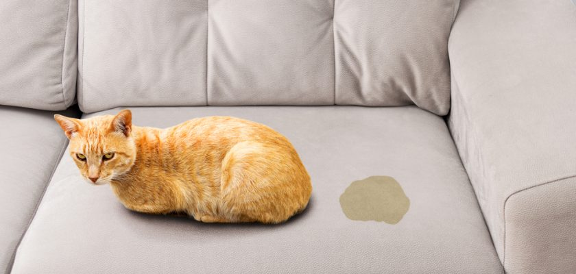 Kedi İdrar Kokusu Nasıl Giderilir?
