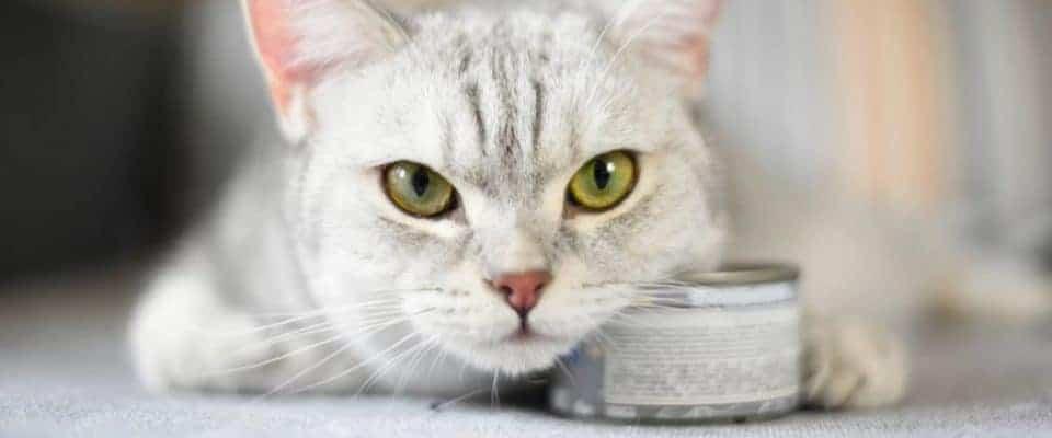 Konserve kedi mamasını dışarıda bırakma süresi nedir?