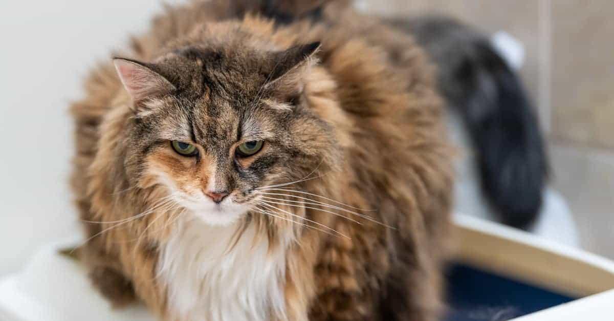 kedi kum kovası