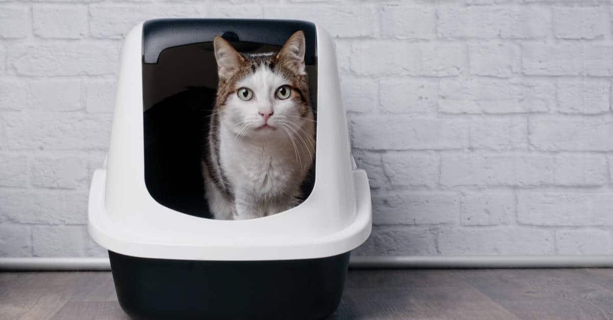 kedi kumu kabı