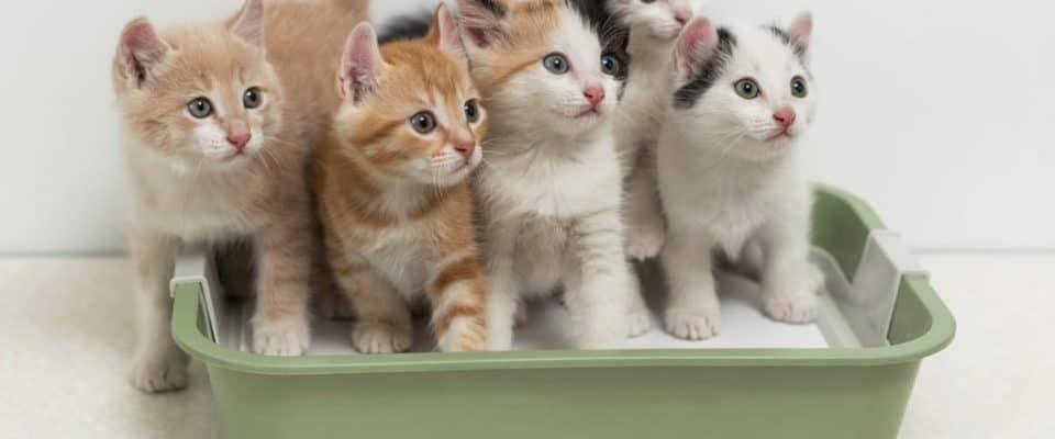 Kedi kumu ve kabı ile ilgili her şey   Önemli noktalar!