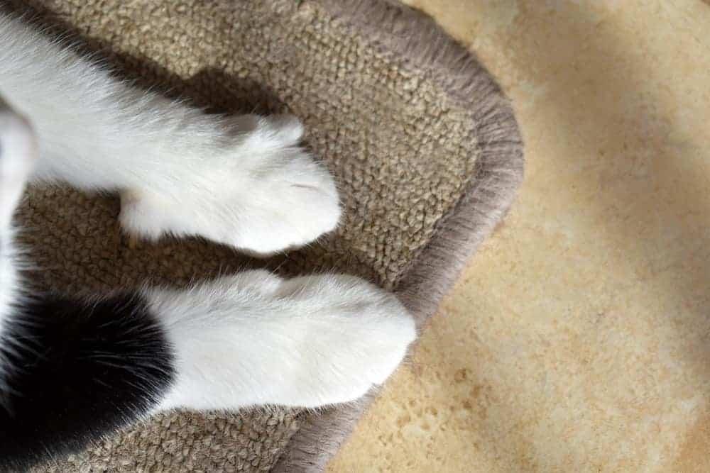 Kedi Paspası