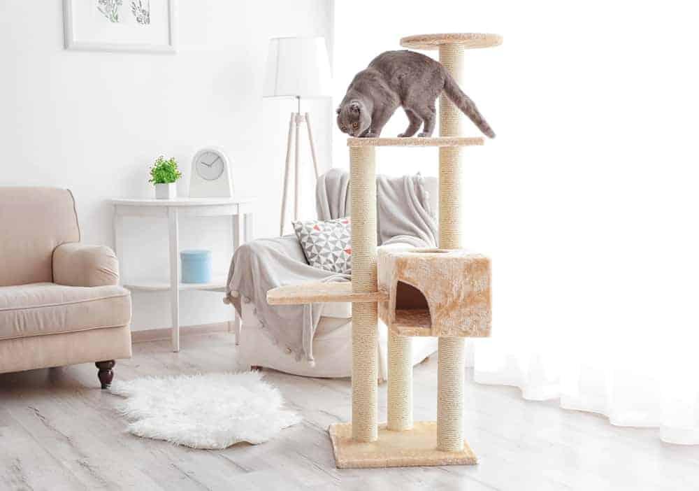 Kedi Tırmalama Eğitimi