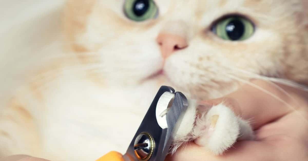 Kedi tırnak makası