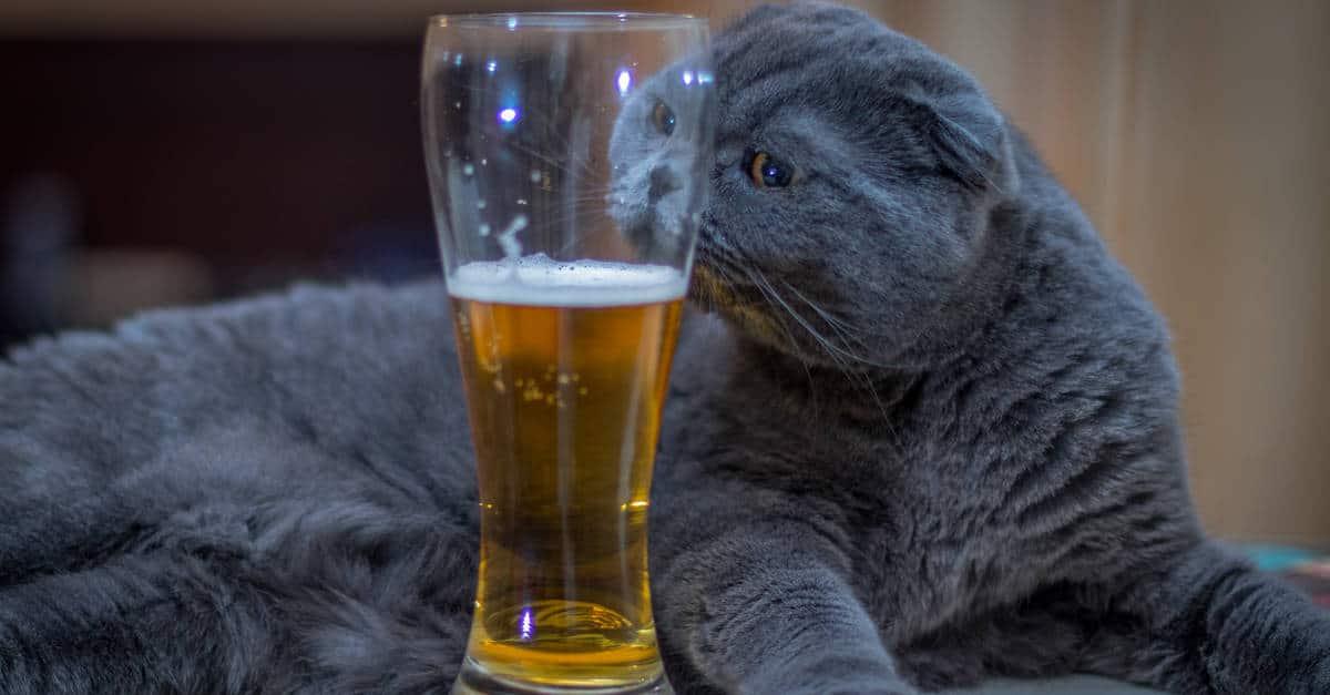 kedi ve alkol