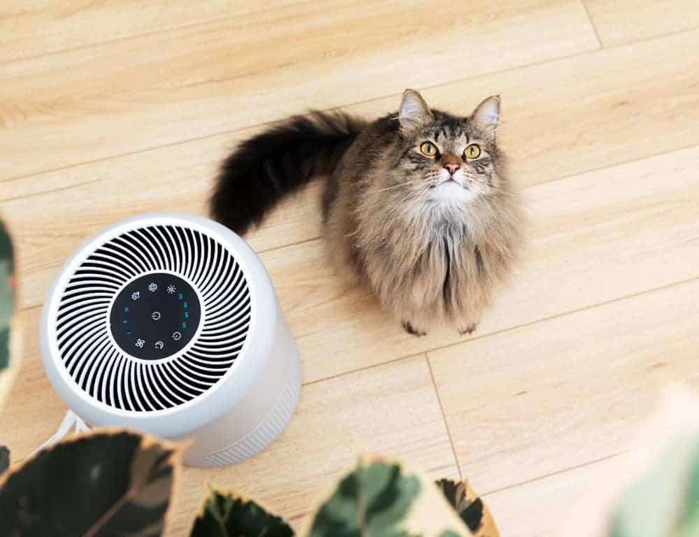Kedi ve hava temizleyici