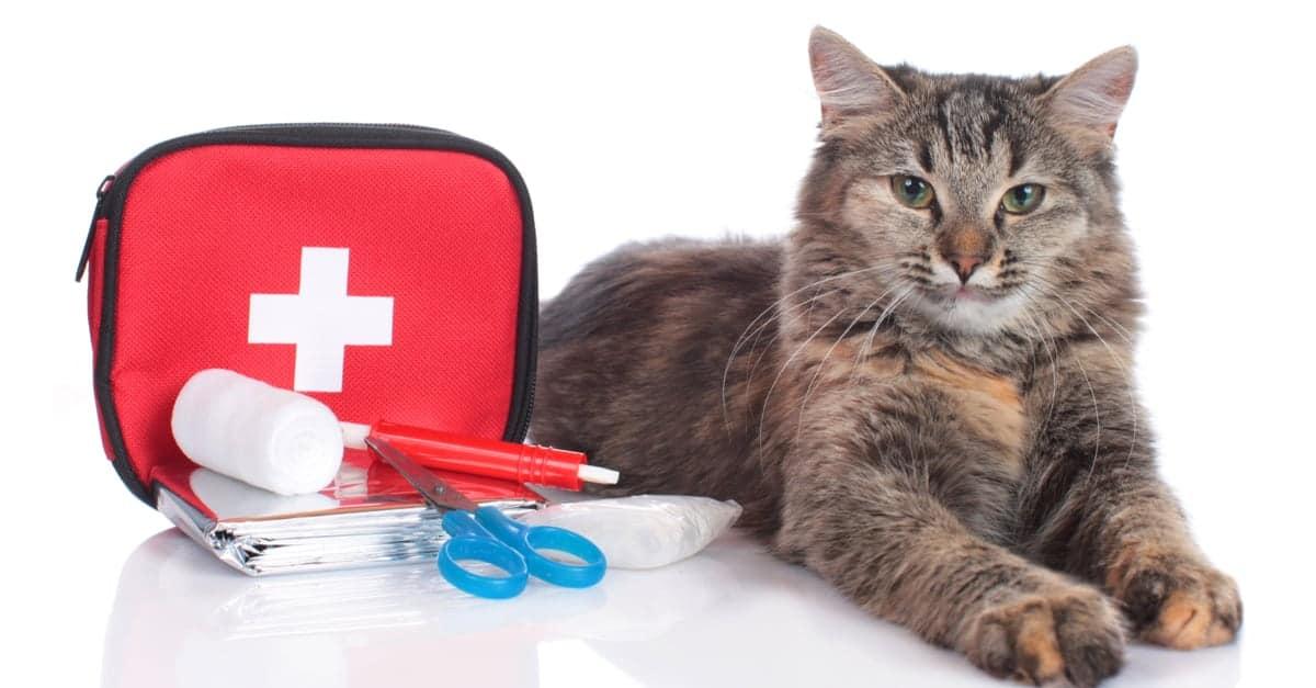 Kedi ve ilk yardım çantası