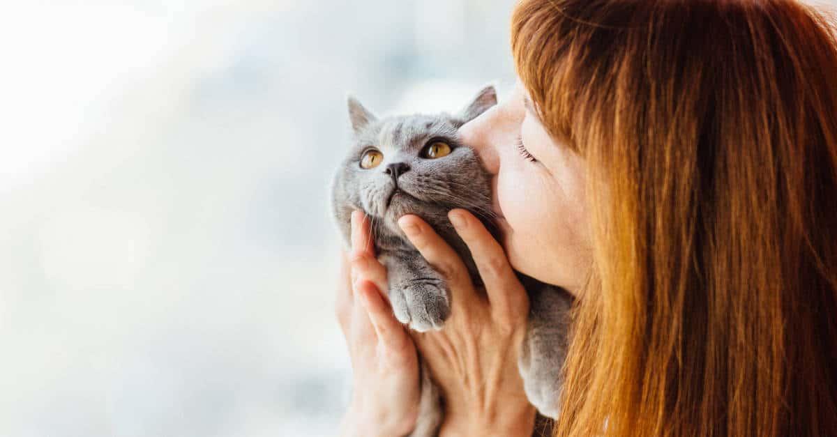 kedi ve insan