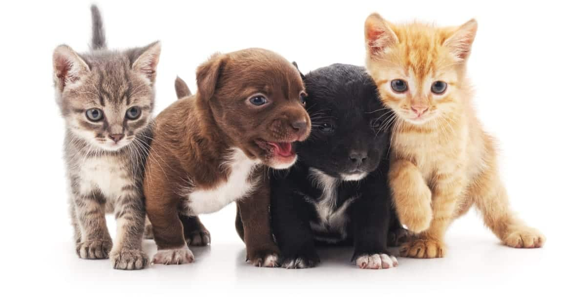 Kedi ve köpek yavruları