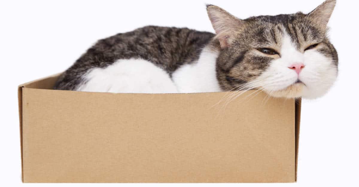 Kedi ve kutu