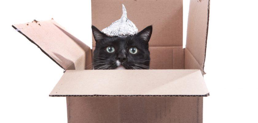 Kediler hakkında bilinmeyen gerçekler
