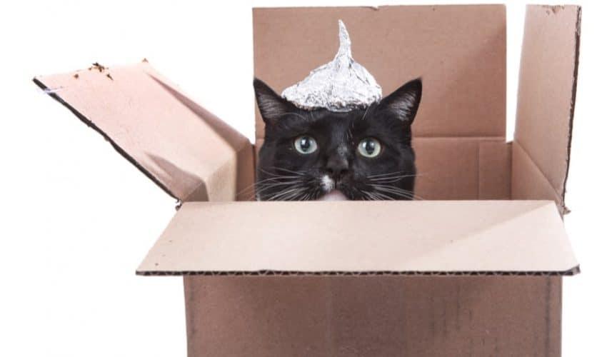 Kedilerin bilinmeyen sırları İnanılmaz 101 bilgi