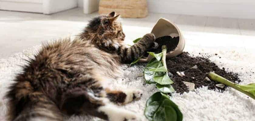 Kediler nasıl terbiye edilir?